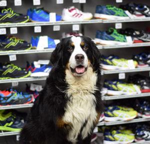 Profilfoto Bürohund Daphne